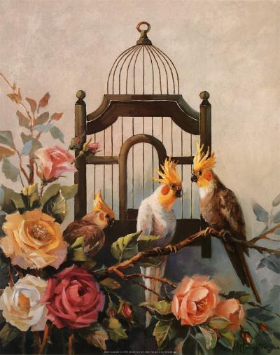 Cockatiel and Roses-Maxine Johnston-Art Print
