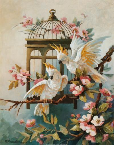 Cockatoo and Blossoms-Maxine Johnston-Art Print