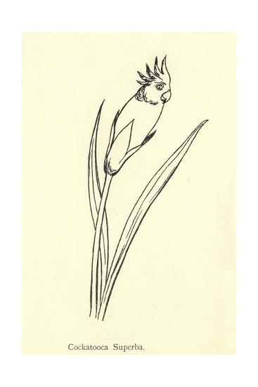 Cockatooca Superba-Edward Lear-Giclee Print