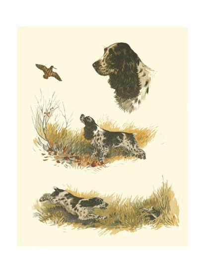 Cocker Spaniel--Art Print