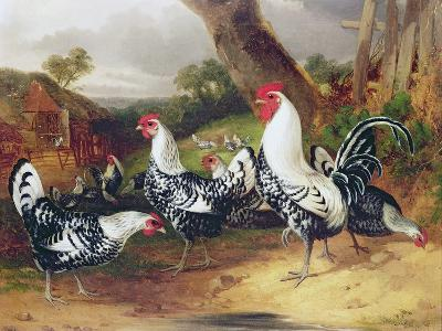 Cockerels in a Landscape-William Joseph Shayer-Giclee Print