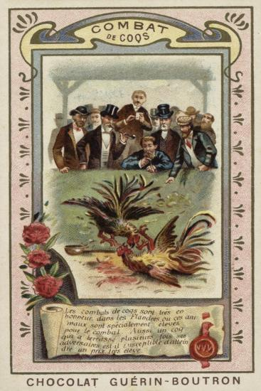 Cockfighting--Giclee Print