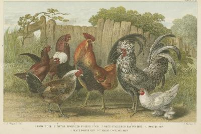 Cocks and Hens--Giclee Print