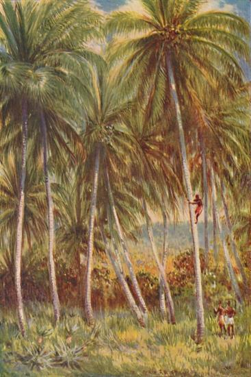 'Coco-nut Palms', 1924-Unknown-Giclee Print