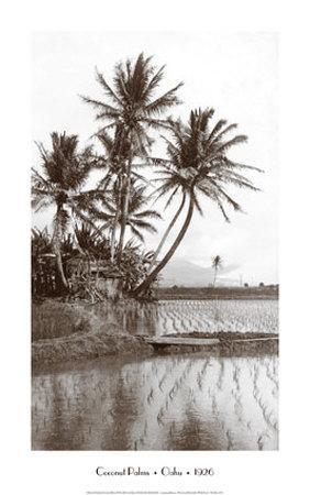 https://imgc.artprintimages.com/img/print/coco-palms-oahu-1926_u-l-el5pq0.jpg?p=0