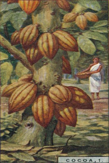 'Cocoa, 1. - Cacao Tree, Trinidad', 1928-Unknown-Giclee Print