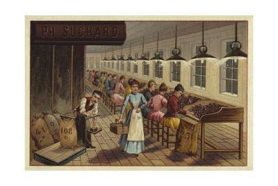 Cocoa Processing Plant--Giclee Print