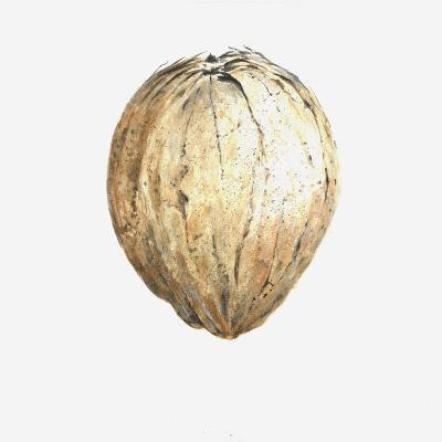 Coconut, 2015-Lincoln Seligman-Giclee Print