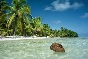 Coconut Floating Ashore on to Tropical Island