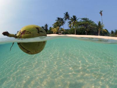 Coconut Floating on Water, Indo-Pacific, Split-Level, Dispersal of Seed-Jurgen Freund-Photographic Print