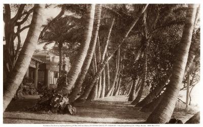 Coconut Lane, Waikiki, Hawaii, 1916--Art Print