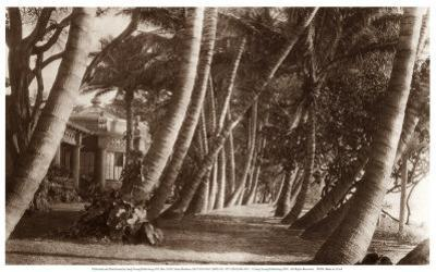 Coconut Lane, Waikiki, Hawaii, 1916
