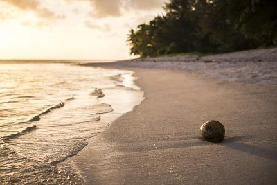 Coconut on a Tropical Beach at Sunset, Rarotonga Island, Cook Islands, South Pacific, Pacific-Matthew Williams-Ellis-Photographic Print