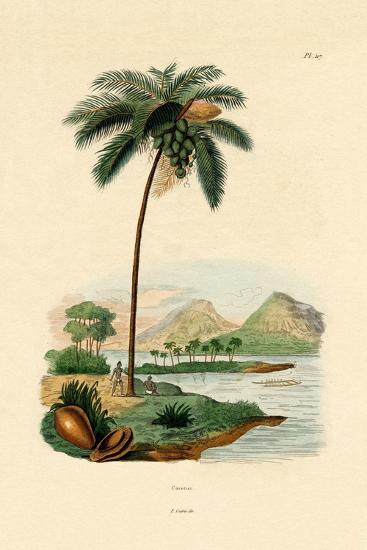 Coconut Palm, 1833-39--Giclee Print
