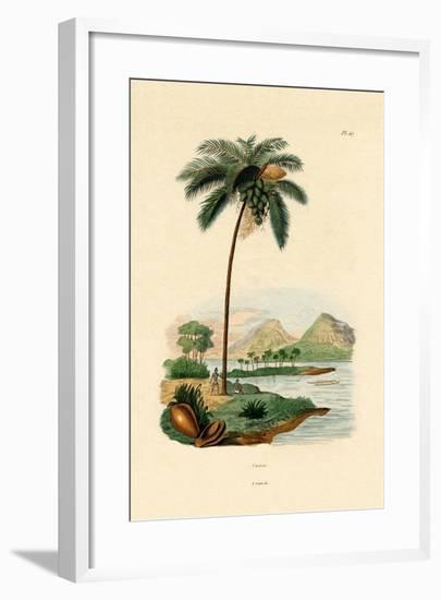 Coconut Palm, 1833-39--Framed Giclee Print