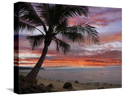 Coconut Palm at sunset near Dimiao, Bohol Island, Philippines-Tim Fitzharris-Stretched Canvas Print