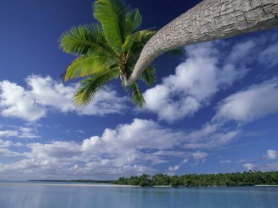 Coconut palm, One Foot Island, Aitutaki, Cook Islands-Frank Krahmer-Photographic Print