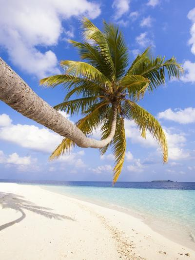 Coconut Palm Tree by the Beach and Lagoon-Frank Lukasseck-Photographic Print
