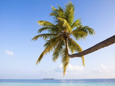 Coconut palm tree by the lagoon-Frank Lukasseck-Photographic Print