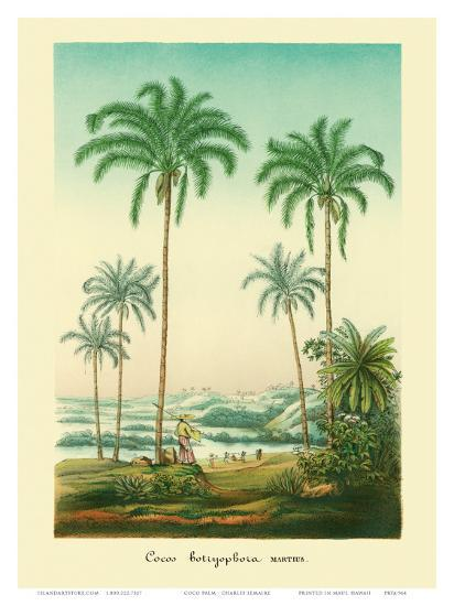Coconut Palm Trees, 1854-Ch^ Lemaire-Art Print