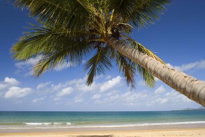 Coconut Palm--Photographic Print