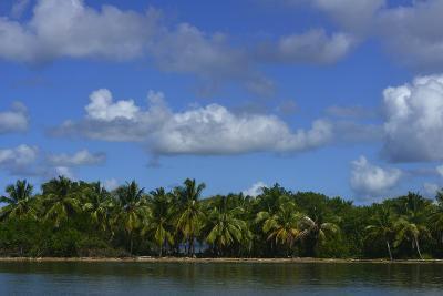Coconut Palms Along the Shore of Samana Peninsula-Raul Touzon-Photographic Print