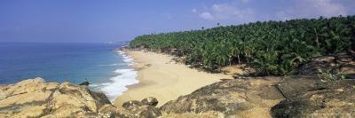Coconut Palms and Beach, Kovalam, Kerala State, India, Asia-Gavin Hellier-Photographic Print