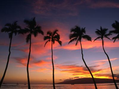 Coconut Palms and the Island of Lanai at Sunset from the Seawall on Front Street, Lahaina, Maui-Karl Lehmann-Photographic Print