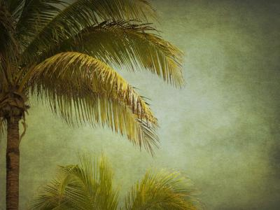 Coconut Palms-Roberta Murray-Photographic Print