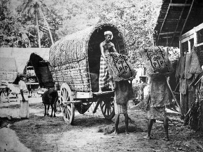 Coconut Production, India, 20th Century--Giclee Print