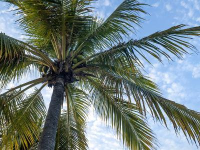 Coconut Tree, Low Angle View, Providenciales, Turks and Caicos Islands, West Indies, Caribbean-Kim Walker-Photographic Print