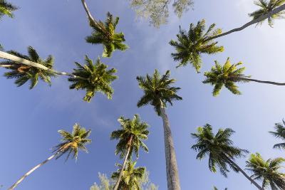Coconut Trees, Plantation L'Union Estate, La Digue Island, the Seychelles-Rainer Mirau-Photographic Print