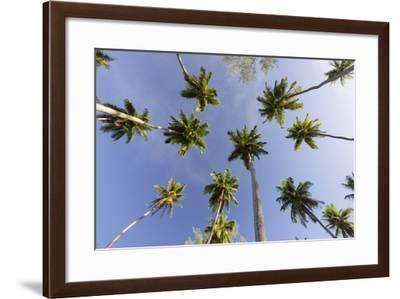 Coconut Trees, Plantation L'Union Estate, La Digue Island, the Seychelles-Rainer Mirau-Framed Photographic Print
