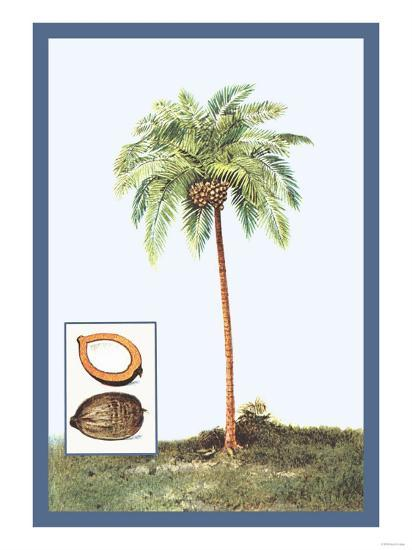 Coconut--Art Print