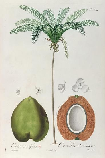 Coconuts and Coconut Tree (Palm Tree)-Louis Michel Dumesnil-Giclee Print