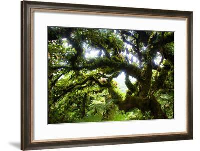 Cocos Island, Costa Rica: the Cloud Forests of Cocos Island Give the Trees a Fuzzy Appearance-Ben Horton-Framed Photographic Print