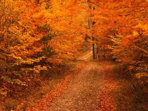 Unpaved Road in Autumn by Cody Wood