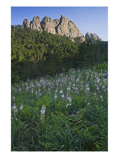 Col de Bavella, Corse-du-Sud, Corsica, France--Art Print