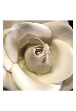 Blushing Rose I