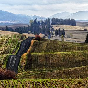 Palouse Hills by Colby Chester