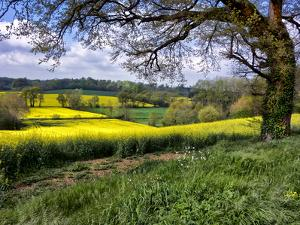 Pastoral Countryside XIV by Colby Chester