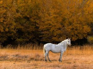 White Horse by Colby Chester