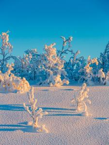 Cold Winter in Lapland Sweden with Temperatures -47 Celsius