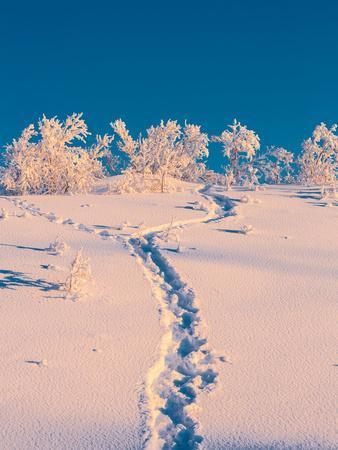 Cold Winter in Lapland Sweden with Temperatures -47 Celsius--Photographic Print