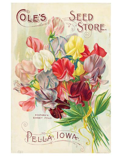 Cole's Seed Store Pella Iowa--Premium Giclee Print