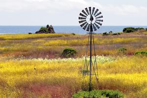 California's Central Coast, Big Sur, USA by coleong