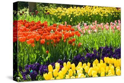Tulips, Hyacinths and Daffodils