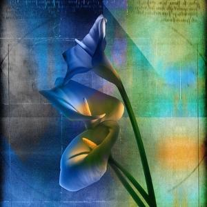 Calla Lilies and Colorful Patterns by Colin Anderson