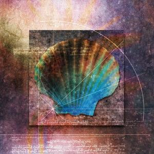 Colorful Clam Shell and Geometry by Colin Anderson