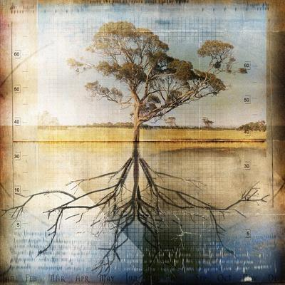 Graph of Tree and Roots